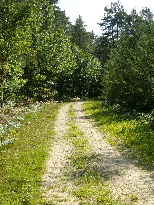 Parcours en forêt domaniale