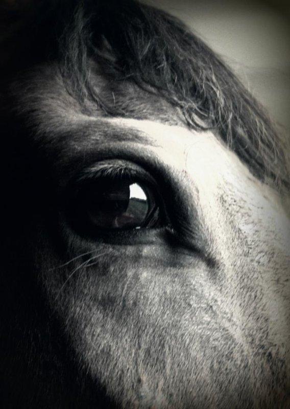 Le cheval est le reflet de notre âme ...