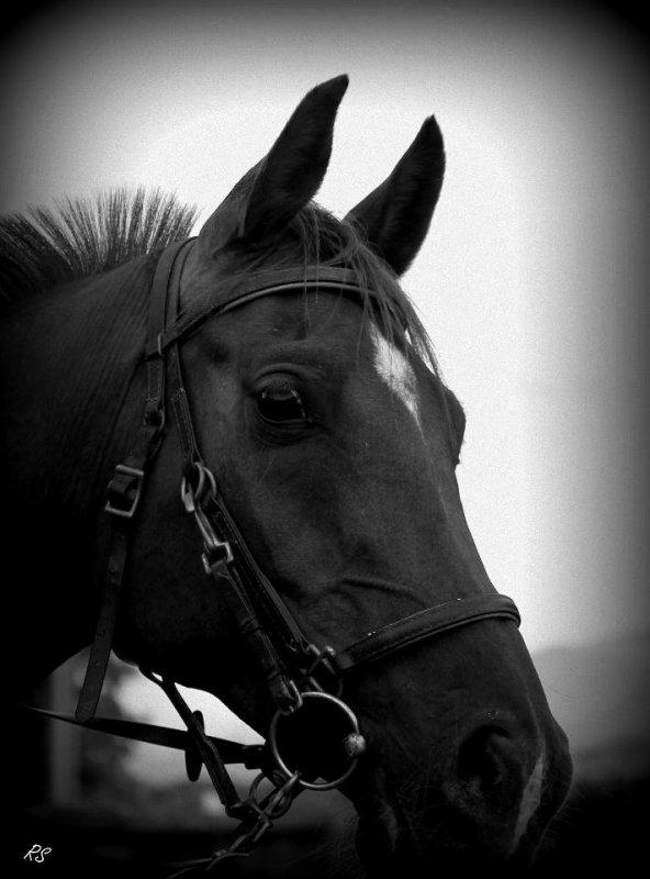 L'air du paradis souffle entre les oreilles d'un cheval ...