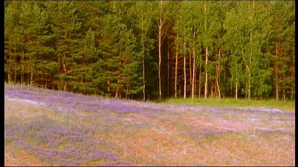 La Lisière de la Forêt Enchantée