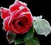 ptit kado avec tout ♥ma Douceur  pour mes chouchouteS mon ami jean louis mouahhhhhh rosette♥♥