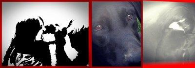 Elly, mon chien, ma vie