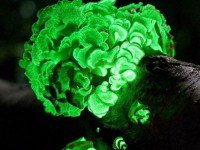 Top 8 des phénomènes naturels les plus incroyables du monde