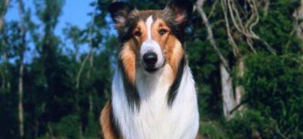 Décès de Pat Derby, la dresseuse de Flipper et Lassie