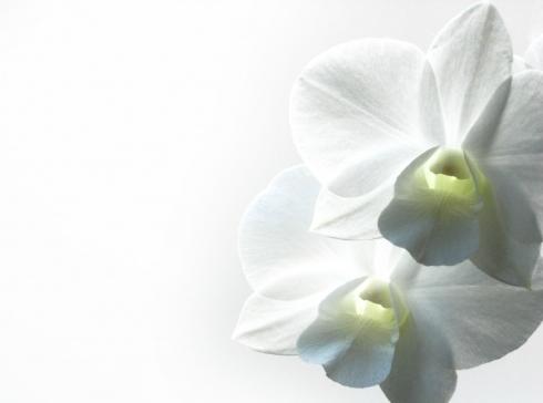 OS n°3 : Flowers