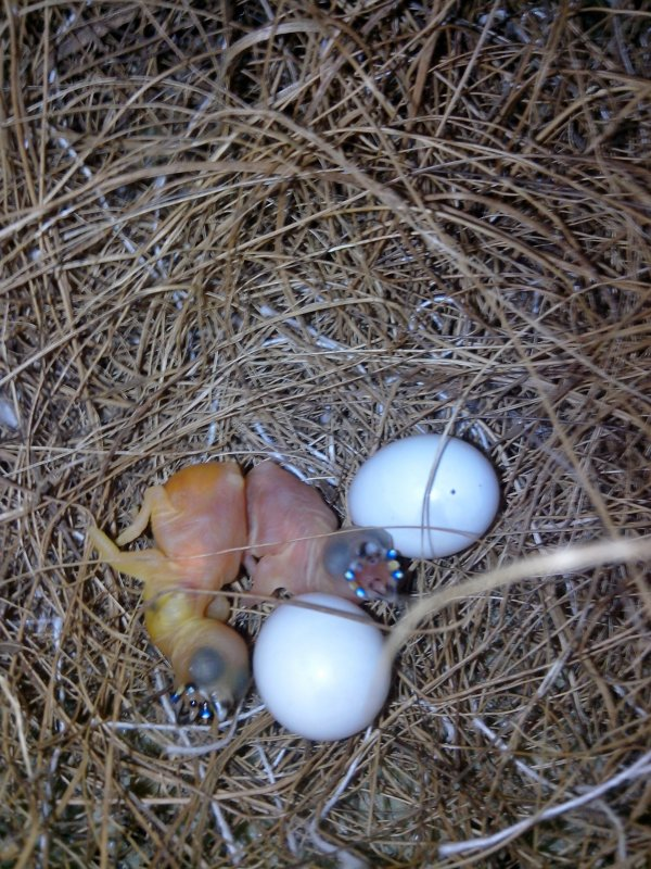Premières naissances !