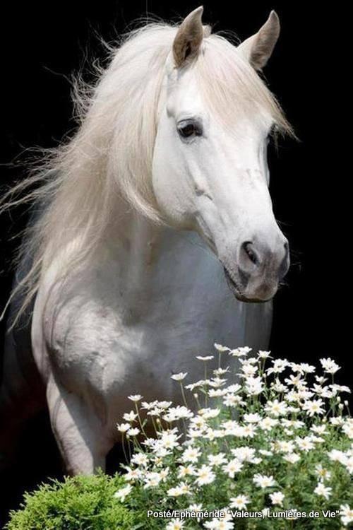 bonjour à tous mes amis(e)s .. je vous souhaite une belle journée de lundi ..et un excellent début de semaine .. bisous Josette