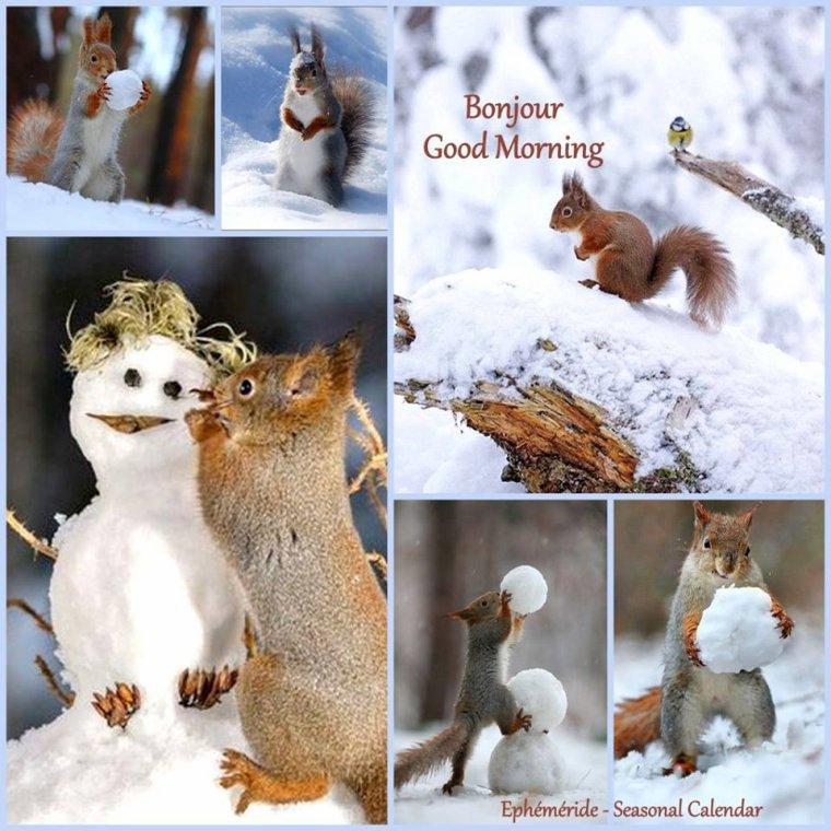 bonjour à tous mes amis(e)s .. je vous souhaite une belle journée de jeudi .. bisous Josette