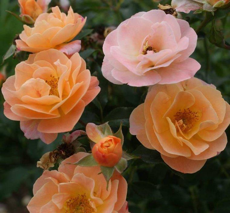 bonjour à tous mes amis(e)s .. je vous souhaite une belle journée de dimanche  .. bisous Josette