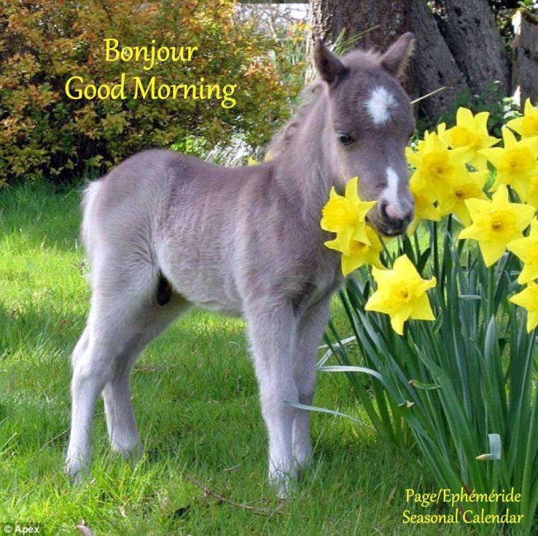 bonjour à tous mes amis(e)s .. je vous souhaite une belle journée du samedi 1er Avril ici avec la pluie !!! .. bisous Josette