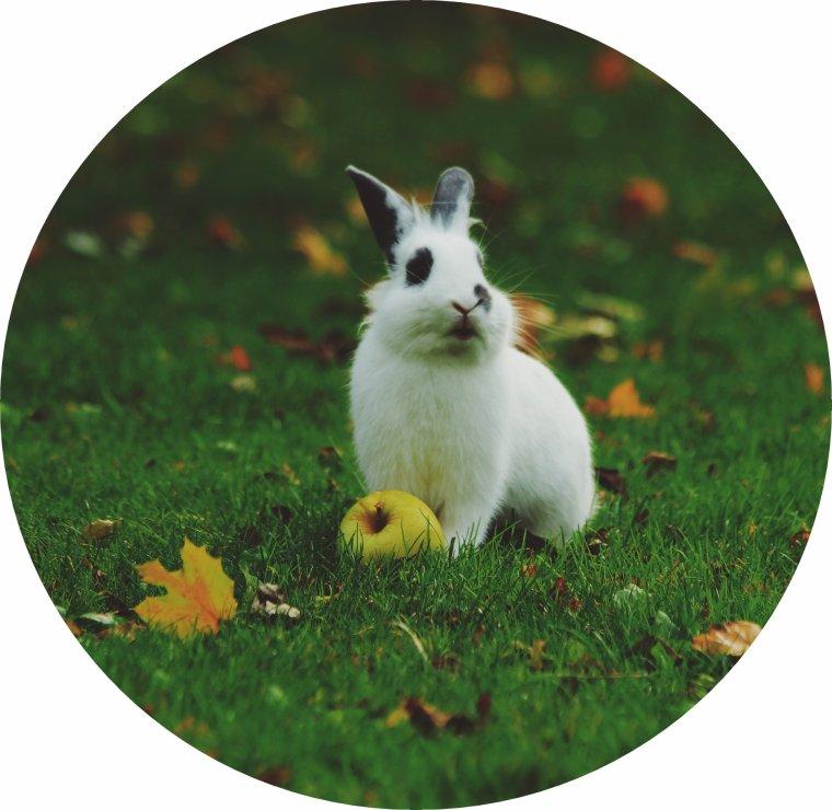 bonjour à tous mes amis(e)s .. je vous souhaite une belle journée du lundi de Pâques ensoleillé.. bisous Josie