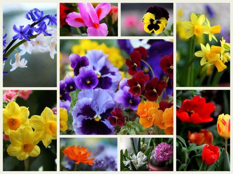 bonjour à tous mes amis(e)s .. je vous souhaite une belle journée de samedi ensoleillée..et un excellent week-end du 1er Mai .. bisous Josie