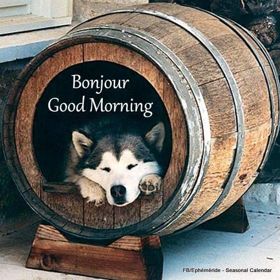 bonjour à tous mes amis(e)s .. je vous souhaite une belle journée de lundi ensoleillée..et un excellent début de semaine .. bisous Josette