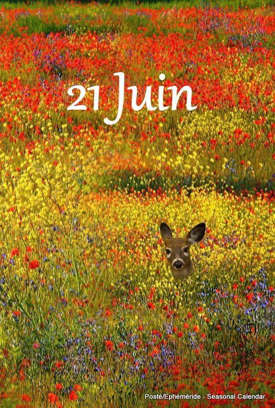 bonjour à tous mes amis(e)s .. je vous souhaite une belle journée de mercredi, 1er jour de l'Eté .. bisous Josie
