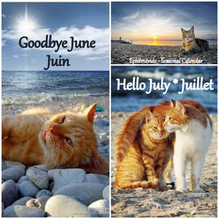 bonjour à tous mes amis(e)s .. je vous souhaite une belle journée du samedi 1er Juillet.. bisous Josette