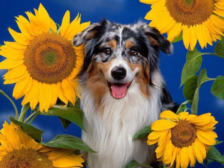bonjour à tous mes amis(es) .. je vous souhaite une bonne journée de dimanche .. bisous Josette