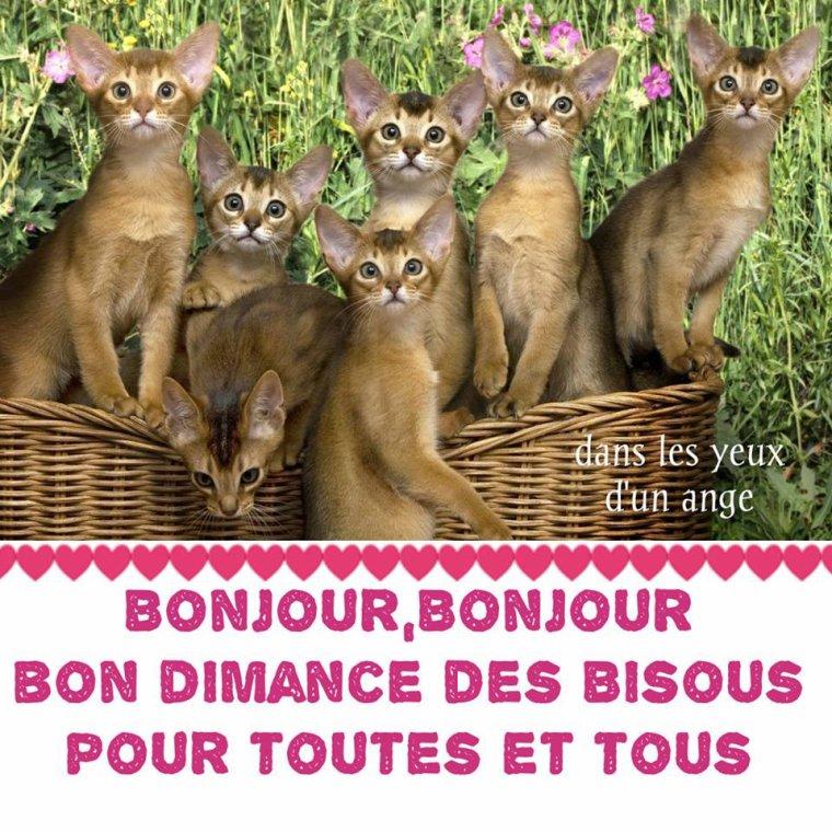 bonjour à tous mes amis(es) .. je vous souhaite une très bonne journée de dimanche .. bisous Josette