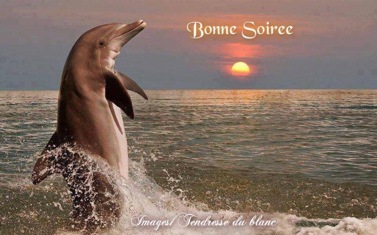 bonsoir à tous mes amis(es) .. je vous souhaite une belle soirée, et une nuit douce et paisible .. bisous Josette