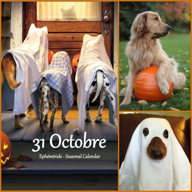bonjour déjà mardi ! je souhaite à tous mes amis(es) une très bonne journée, la dernière du mois d'Octobre  .. bisous Josie