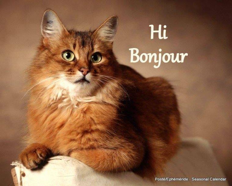 bonjour à tous mes amis(es) ... je vous souhaite une bonne journée de jeudi ... bisous Josette