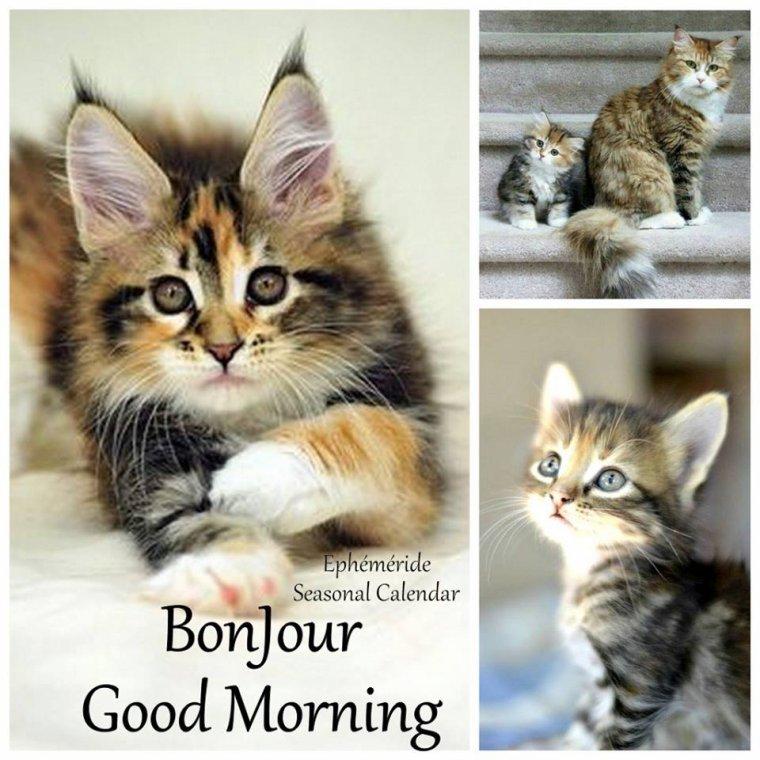 bonjour à tous mes amis(es) ... je vous souhaite une très bonne journée de mardi ... bisous Josette