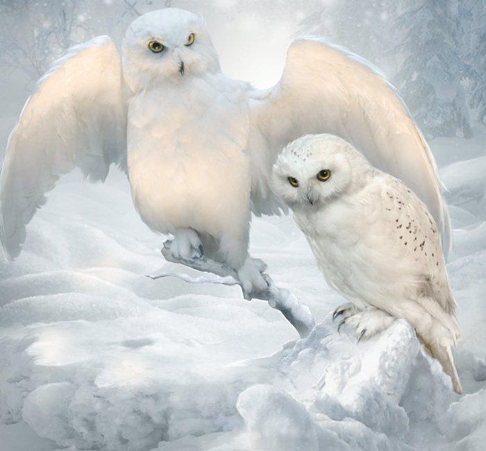 Bonsoir mes amis(es), je viens vous souhaiter une très bonne soirée , une nuit douce et agréable .. bisous Josette