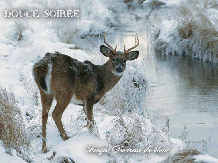 bonsoir à tous mes amis (es) .. je vous souhaite une belle soirée, et une douce nuit apaisante .. bisous Josie
