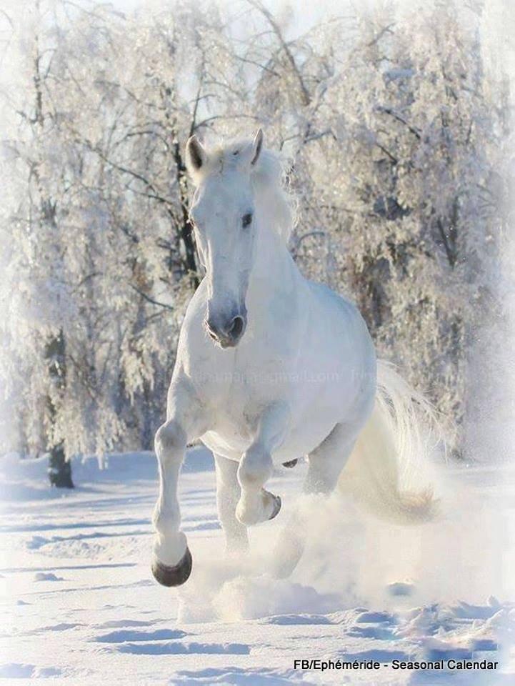 bonjour à tous mes amis(es) ... je vous souhaite une très bonne journée de mardi... bisous Josette
