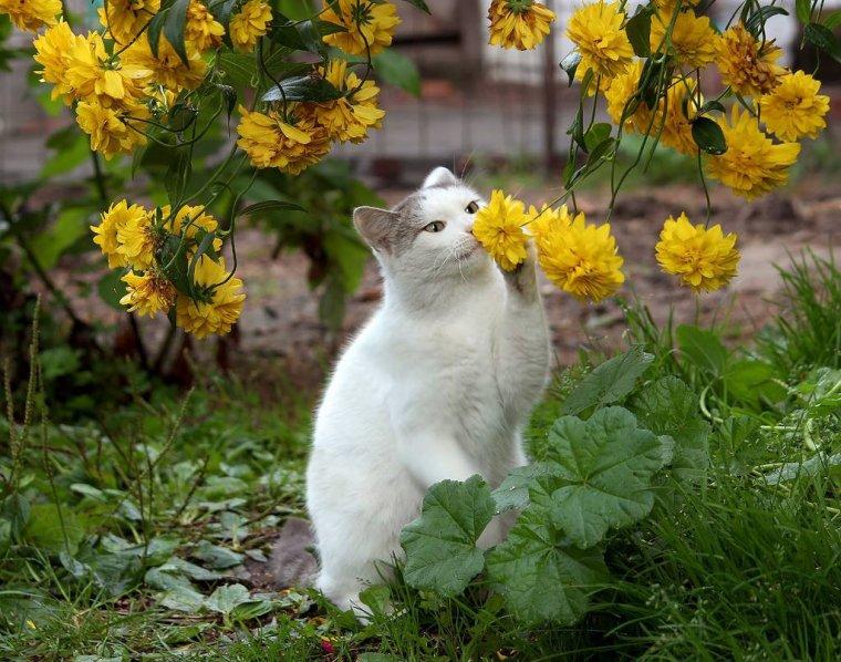 bonjour mes amis(es) .. je vous souhaite un excellent appétit,     et un bel après midi de lundi , ici toujours un beau soleil .. bisous Josette