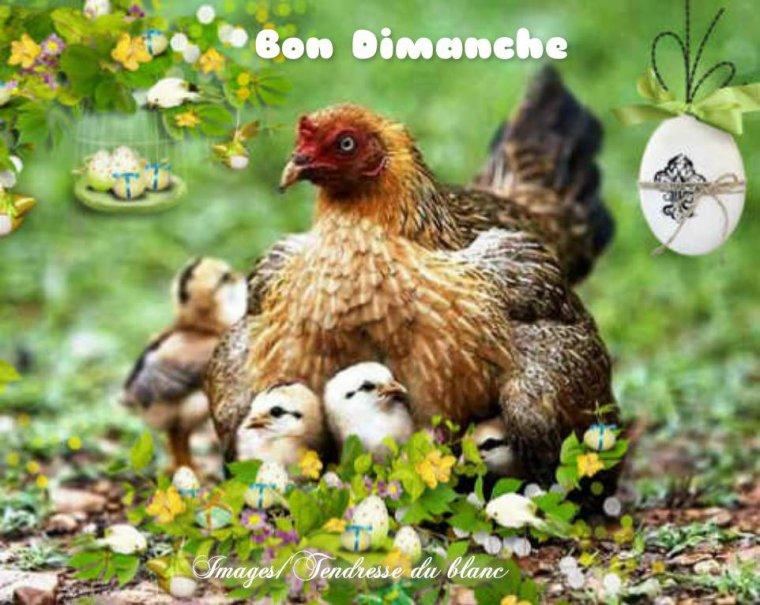 bonjour à tous mes amis(es) ... je vous souhaite une très bonne journée du dimanche de Pâques... bisous Josette