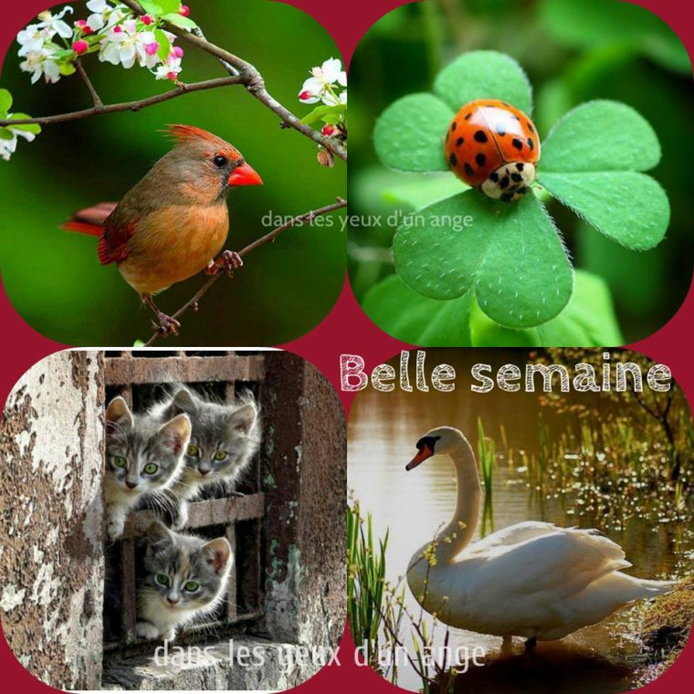 Bonjour déjà mardi ! je souhaite à tous mes amis(es) une très bonne journée ... bisous Josette