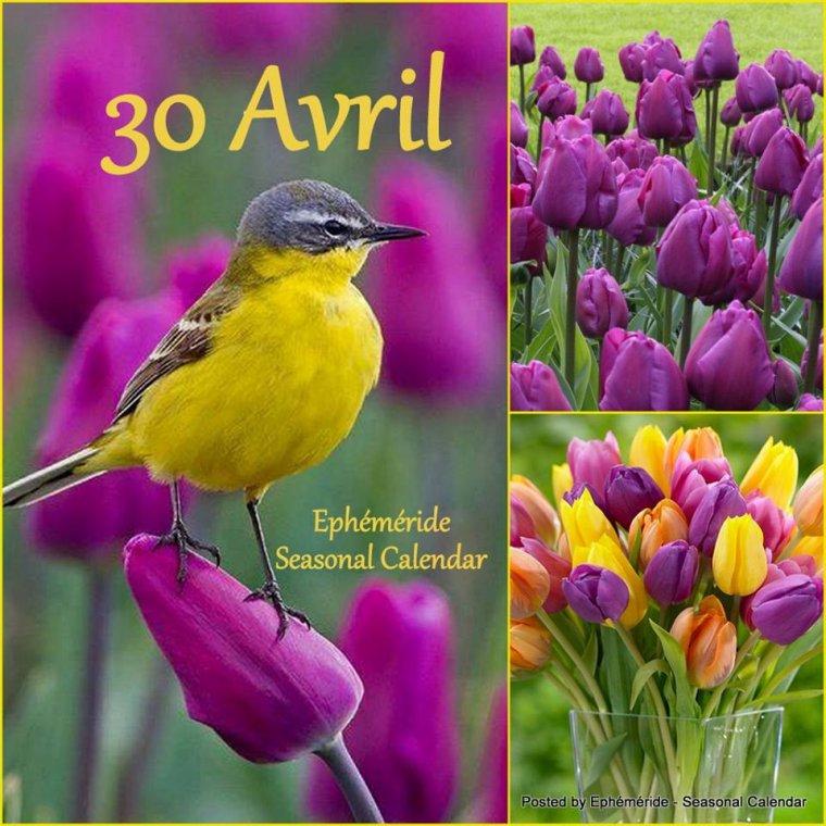 bonjour à tous mes amis(es) ... je vous souhaite une très bonne journée de lundi, dernier jour du mois d'Avril, et un excellent début de semaine ... bisous Josie