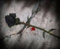 la confiance c'est comme une rose avec le temp elle se fanne