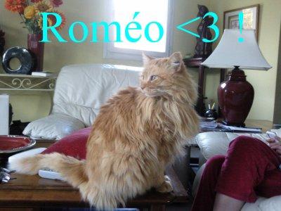 Roméo <3 !