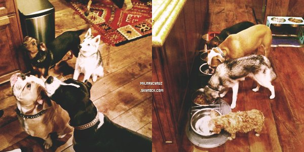 26-11-12  Miley, Noah et Tish étaient dans un Pet Store à Los Angeles. C'est un flop pour la tenue je trouve que seulement le pull et le collant sont beau :/