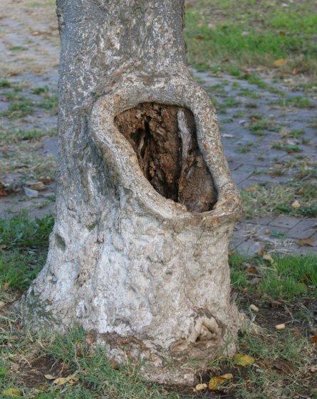 Wc arbre