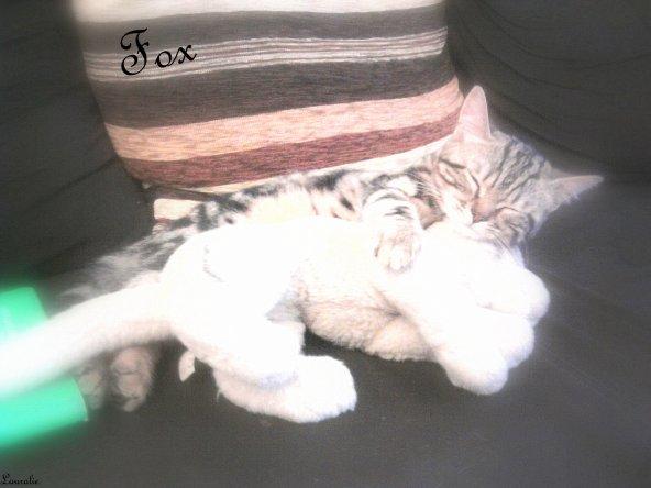 Mon petit chat d'amour