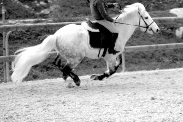 Bien plus qu'un poney... R.I.P.