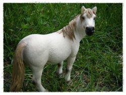 ~ Présentation des nouveaux poneys ~