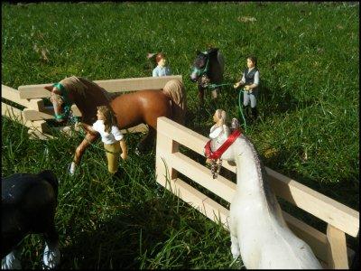 ~ Nouveaux chevaux ~