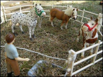 ~ Emménagement des nouveaux poneys ~