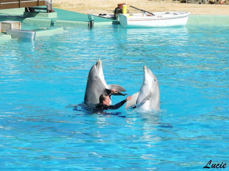 Planète sauvage - Spectacle de dauphins