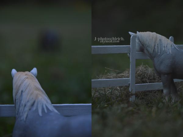 Article 26 : Photo-shoot n°7 (suite) :