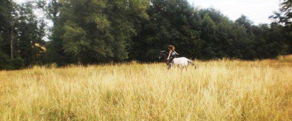 Car ici ce sont mes chevaux les rois ce qui font mon bonheur quotidient et qui unisse Amour et complicité dans le meme endroit car l'amour l'emmporte toujours  . ♥