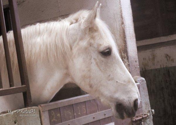 Un jour, un cheval ... ♥ (Avec Albert, Lamantin & Nator ♥)