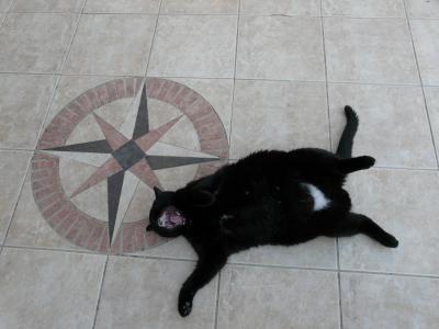 Chat qui dort ou chat qui joue gros chat noir ou petit chat roux a chacun son chat chacun - Chat qui dort sur son maitre ...
