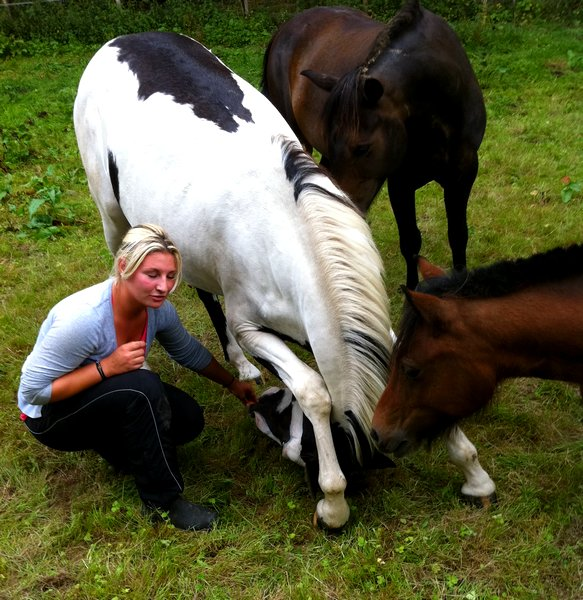 Équitation, Un art de vivre.