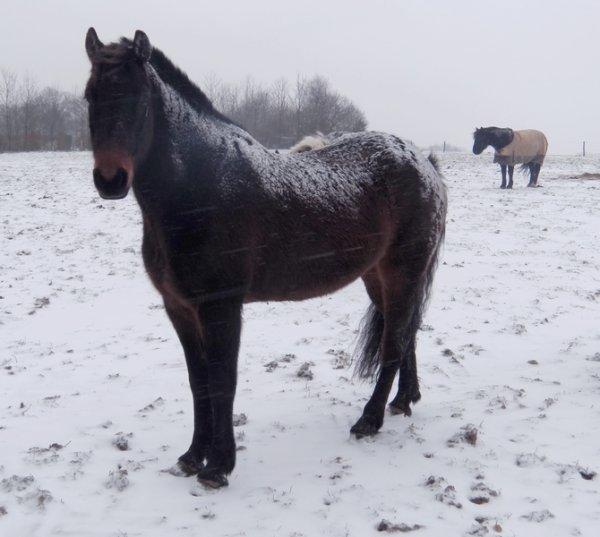 """""""Une bonne neige tomber, veux dire de belle photos a vous montrez."""""""