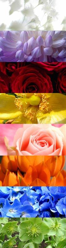 Le Langage des Fleurs !