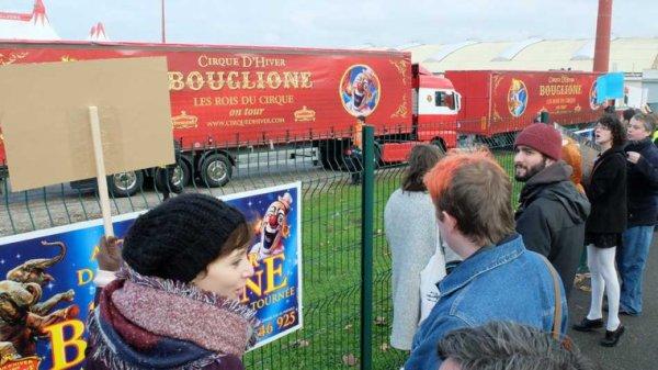 Les Français sont anti cirque mais ne dit rien quand l'état les assomme de taxe  au cirque les animaux sont nés en captivité  et ne connaisse que sa ..... Soutient au cirque bouglione et a tous les cirques du mondes